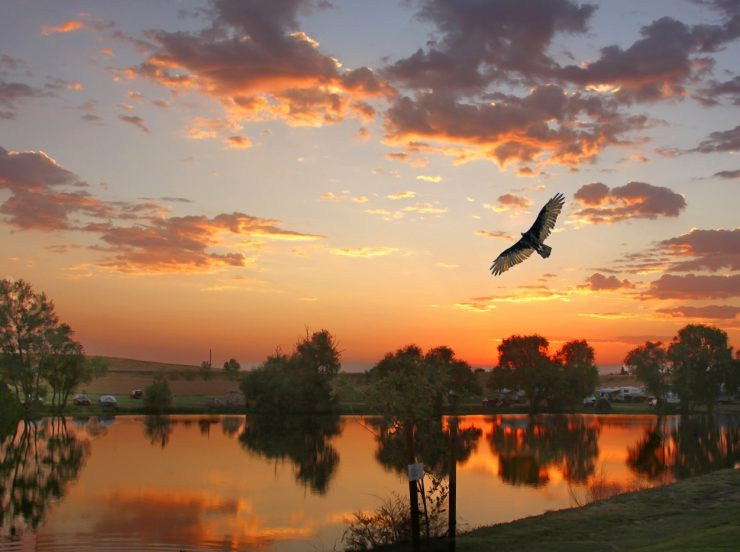 lds-110-sunset-with-eagle-k